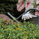 Lee County Master Gardeners