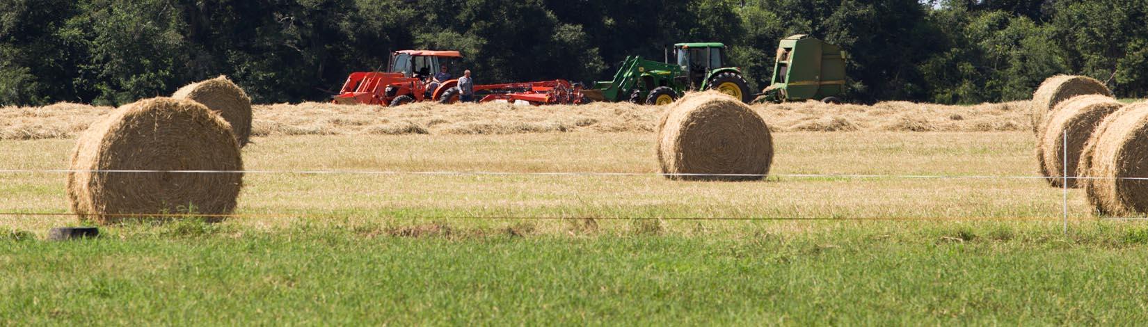 hay rolls in field