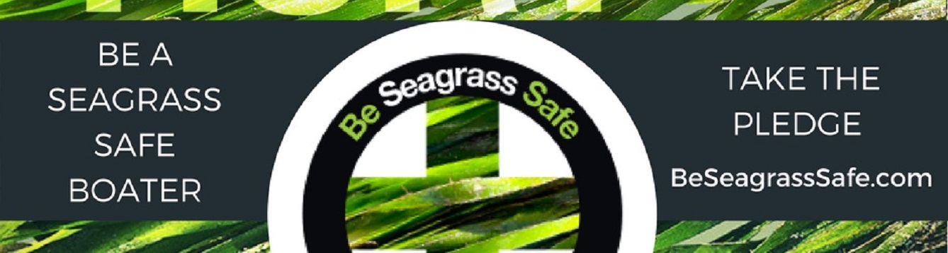 take the seagrass scarring pledge