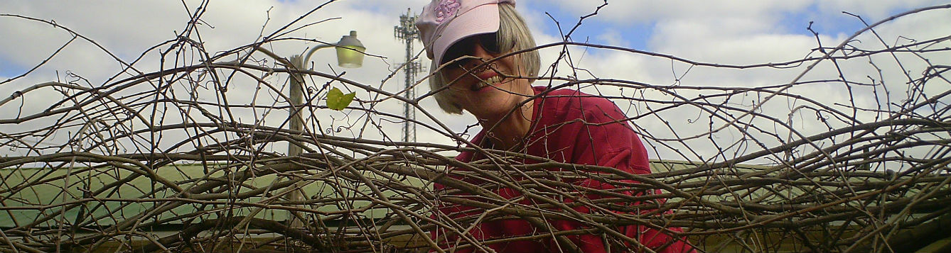 lady with pink hat seen behind an overgrown muscadine grape vine
