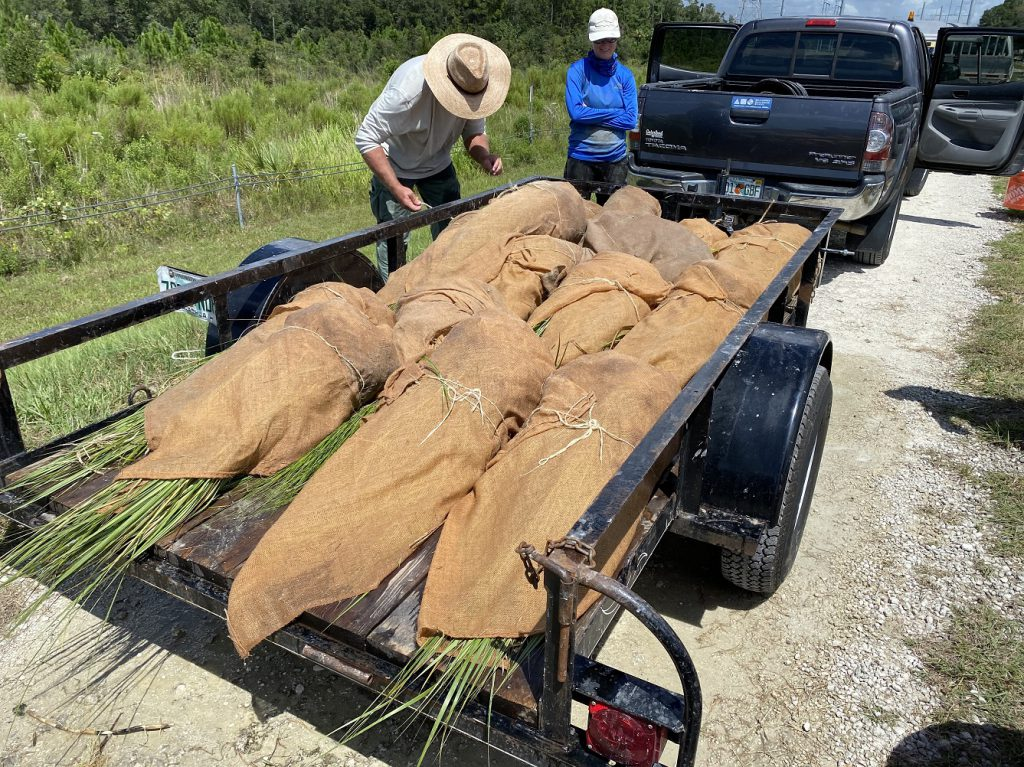 trailer load of marsh plants