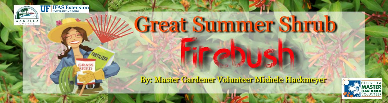 FL WMGV Firebush