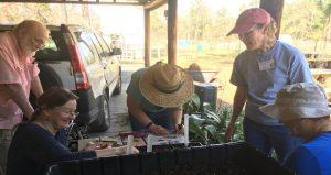 2019 MG Spring Plant Sale Prep 3