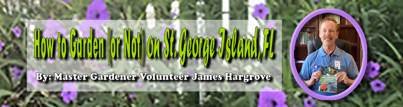 How to Garden (or Not) on St. George Island, FL feat