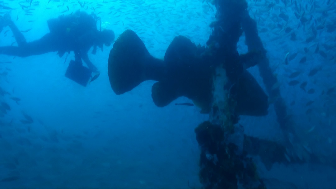 diver and Goliath grouper