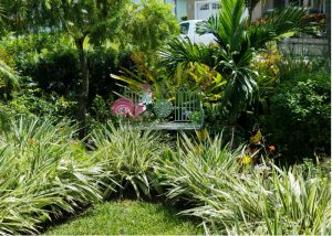 drought tolerant plants in full sun garden