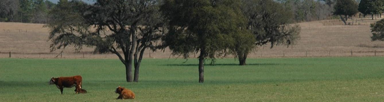 Bahiagrass pasture