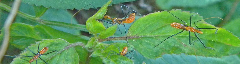 gardens pests