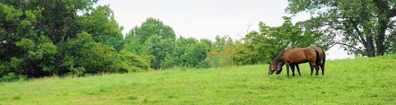 horse manure in pasture