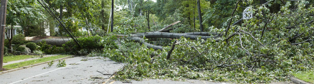 Downed tree in the road takes down power lines after a large storm