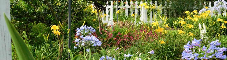 Florida Gardening 101 starts September 5th - UF/IFAS Extension ...