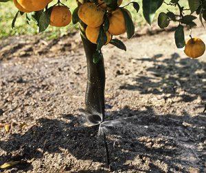 Water in Citrus Grove