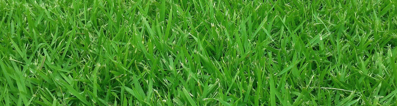 turf grass and lawn