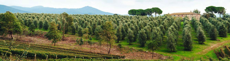 Panorama view of Italian farm