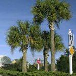 Central Florida Palm