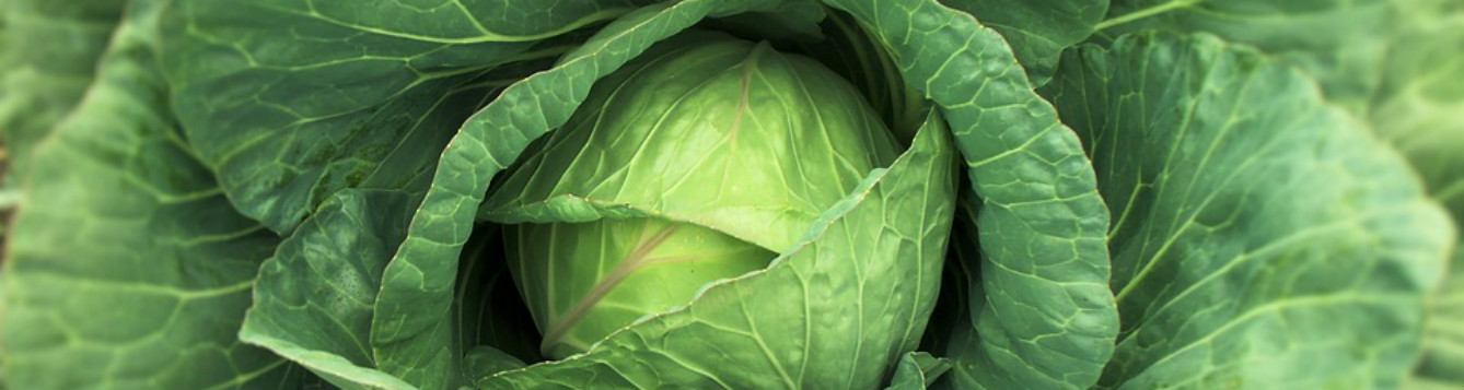 Cabbage Photo Source - Max Pixel