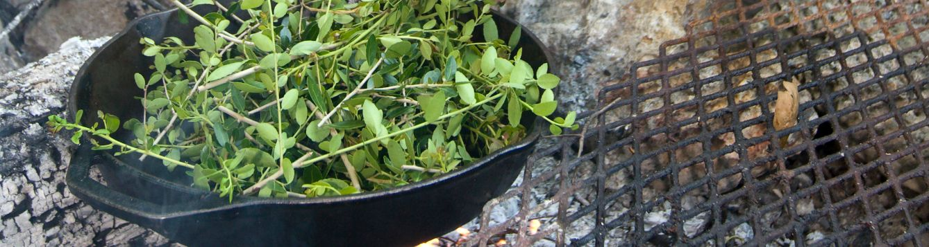 Roasting Yaupon Holly leaves for tea