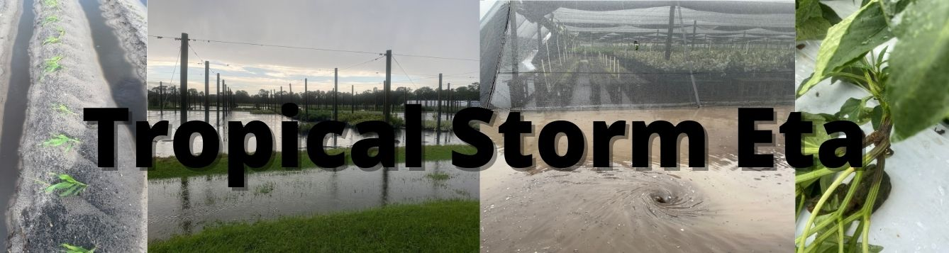 "photos of storm damage to nurseries and farms & title ""Tropical Storm Eta"""