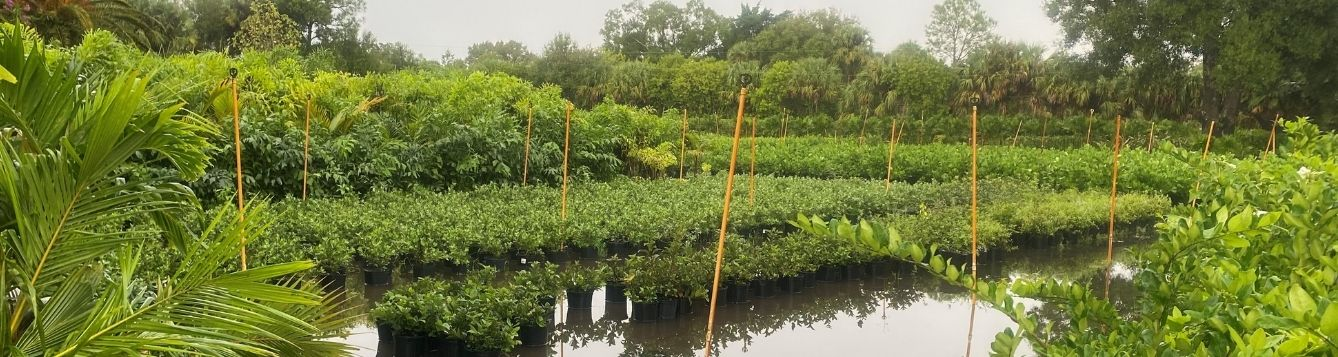 potted plants at one Martin County nursery sit in flood waters from Tropical Storm Eta