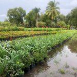 nursery plants sit in flood waters after TS Eta
