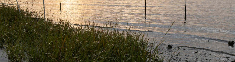 Coastal Shoreline Restoration