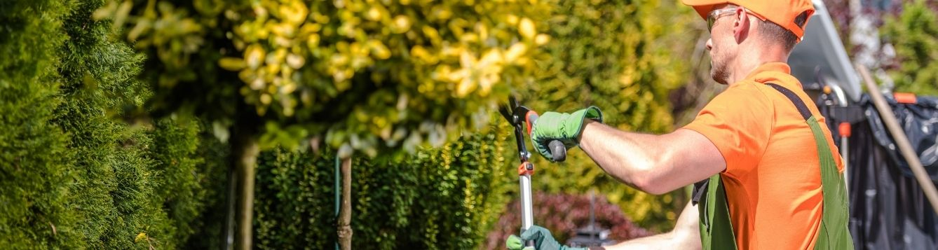 green industry professional pruning shrubs; shows the work of green industry professionals