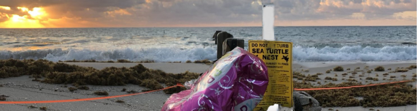A helium balloon remains stuck on the stake of a sea turtle nest in Miami. Photo: Leanne Hauptman