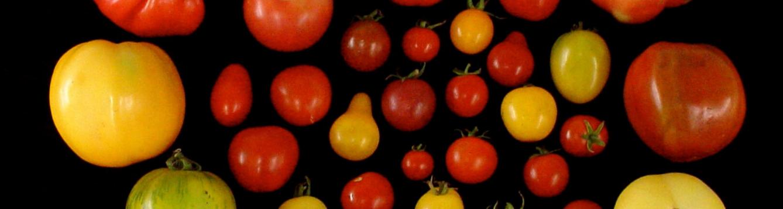 Heirloom tomato variations