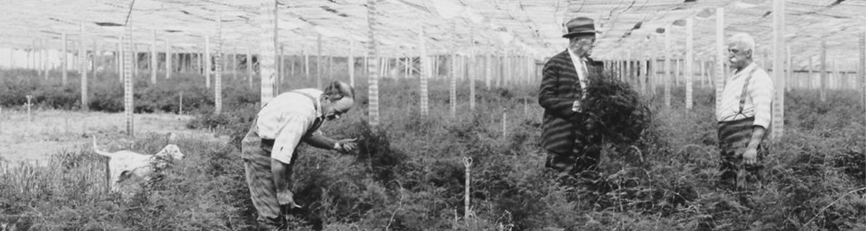 fern greenhouse