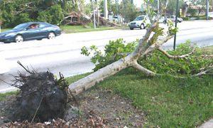 fallen_tree_ufifas
