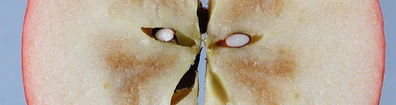 internal browning of apple