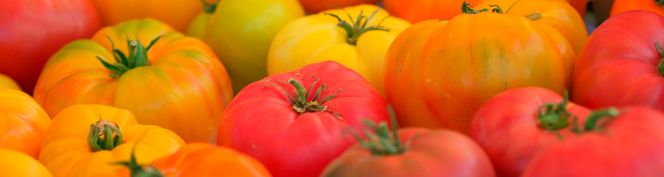 Heirloom Tomatoes To Grow In Florida
