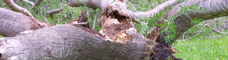 tree down in hurricane