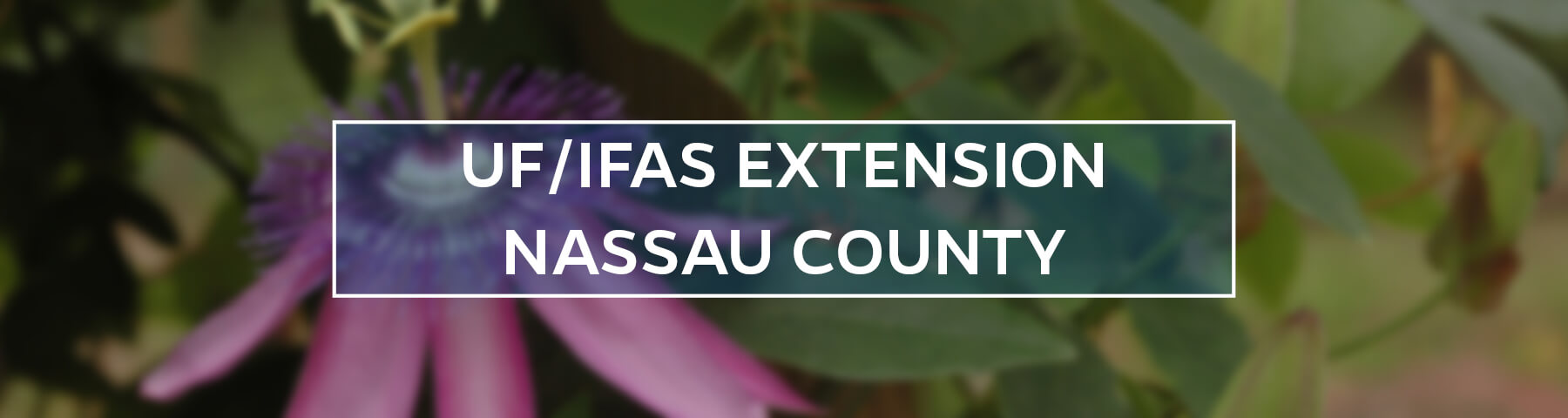 UF/IFAS Extension Nassau County