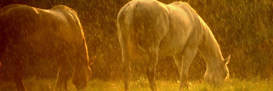 Horse-in-Rain