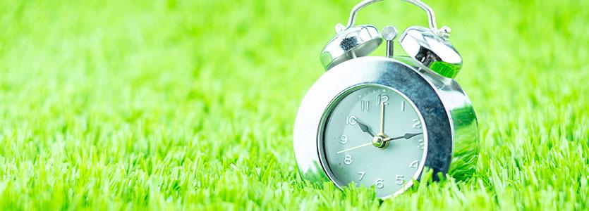 clock in grass