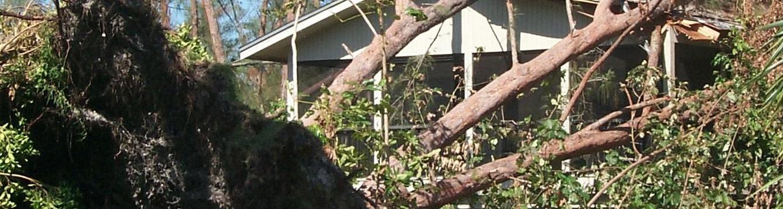 Fallen tree in home landscape