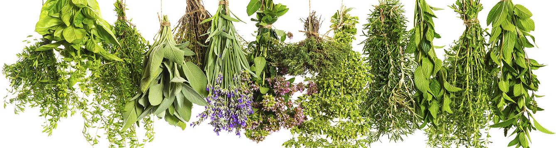 June Gardening Checklist