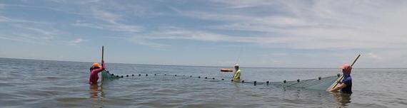 Sam and field team deploy a seine net