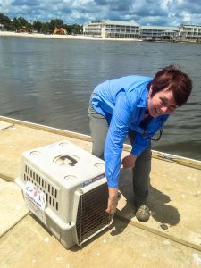 Cedar Key Bird Rescue volunteer Anne Lindgren prepares to release a rehabbed pelican.