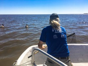 Cedar Key Bird Rescue lead volunteer Crosby Hunt working with a local tour operator to capture an entangled pelican.