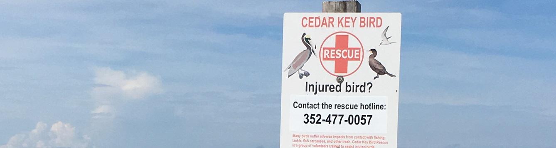 Cedar key bird rescue hotline