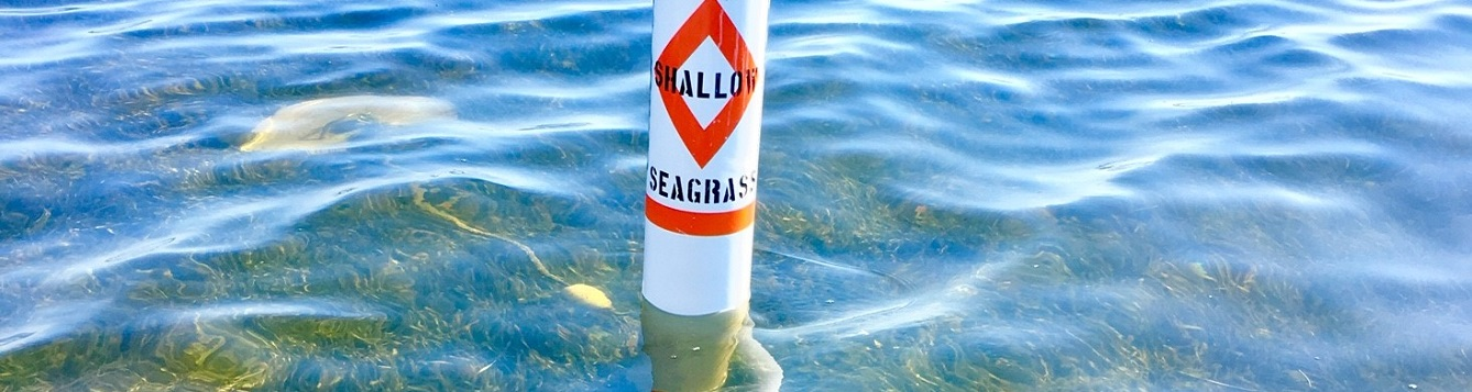 a seagrass warning buoy among dense seagrass