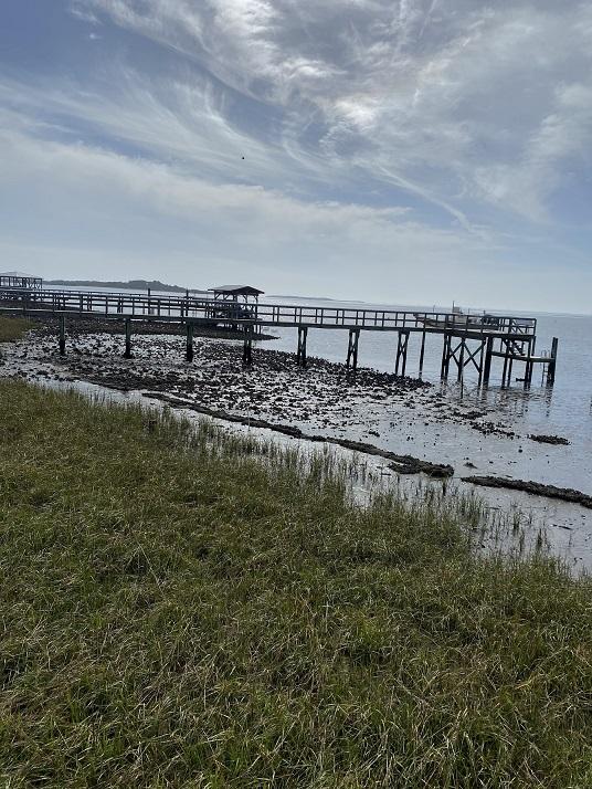 established marsh at the Joe Rains living shoreline