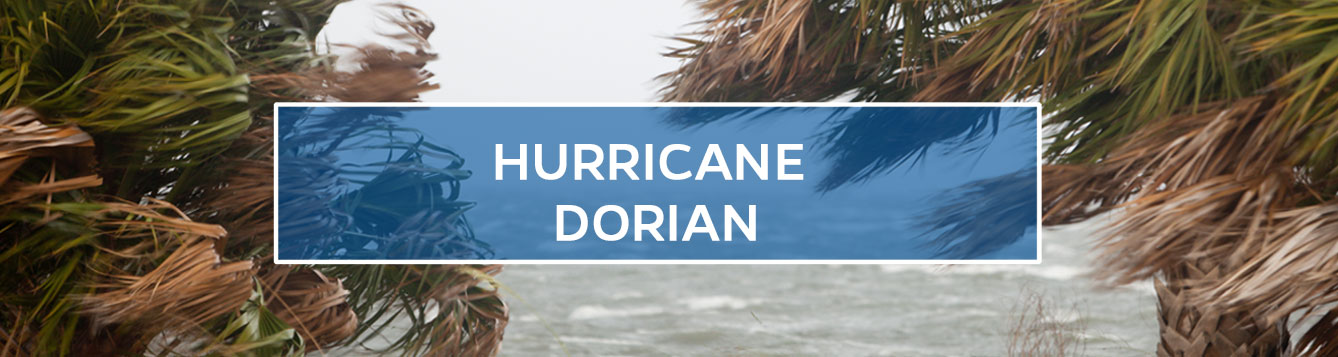 Hurricane Dorian Updates - Palm Trees In a Storm