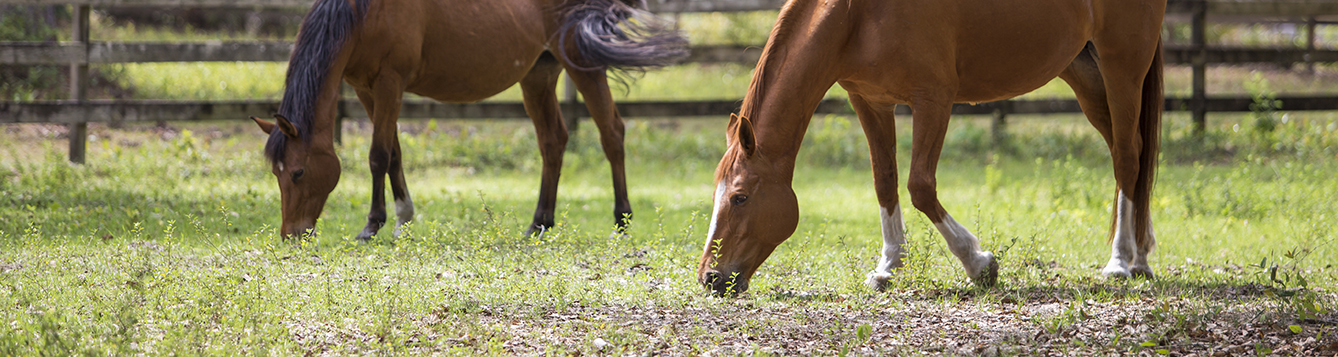 image-horse-grazing