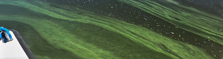 image- algal bloom - lake