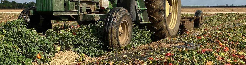 mowing tomato COVID19 farm