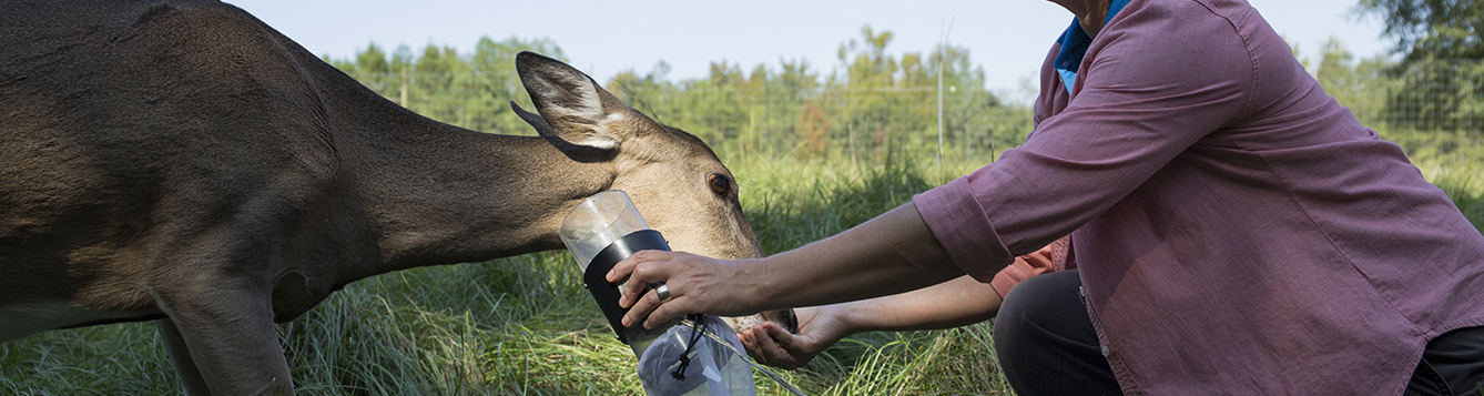 Researcher collects insect samples off of a deer.