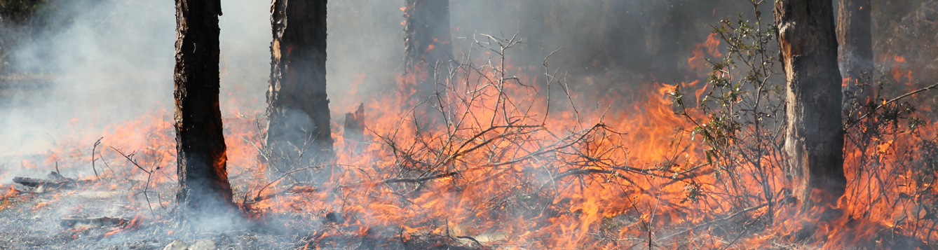 Prescribed fire at the Ordway-Swisher Biological Station